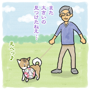 あたち柴犬 抹茶だヨ!  - 伊賀忍者柴犬の道 --111217_4丸いものが実る季節