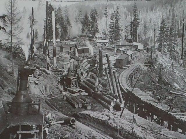 1901年ごろ アメリカ林業画像   よしみっちゃんブログ