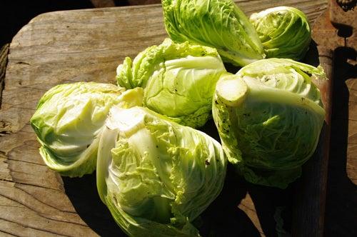 横山さんちの旬のこだわり宅配有機野菜