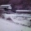 ∵ 凍てつきの画像