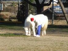 観光乗馬 クラブコルツ