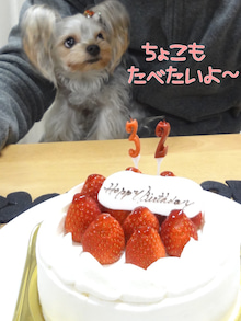 ☆。*・Sweet choco life・*。☆ヨークシャテリア-2011年12月
