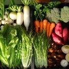 今の季節の旬のお野菜セットの中身は・・・の記事より