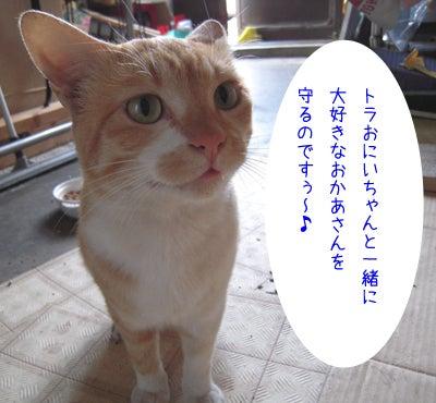 ぶぅぶぅ♪おぶぅやん ~チーム看板's~