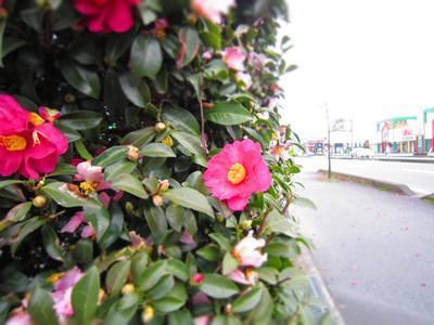 勝手に☆とやまの定住コンシェルジュのBlog