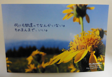 2011☆いまさらブログデビュー