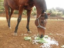 馬を愛する男のブログ Ebosikogen Horse Park-ユキノマイフル
