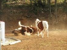 馬を愛する男のブログ Ebosikogen Horse Park-ゴロゴロ