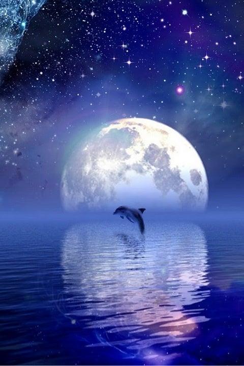 月と話すイルカ