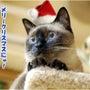 メリー・クリスマスに…