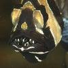 バンガイ・カーディナルフィッシュのお写真ですの画像