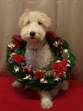 nano(ナノ) てくてく-Merry Christmas