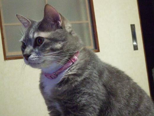 ネコに真珠・豚にゴハン-キリッ1