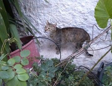 ギリシャ猫4