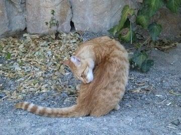 ギリシャ猫1