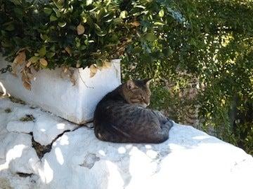 ギリシャ猫3
