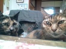 $ニャタロとすみれ+存Bの愛ブログ-20111226073749.jpg