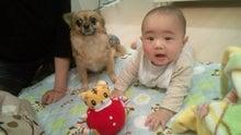 ☆CHIHUAHUA センタ一家の気まぐれ日記☆-20111220205309.jpg