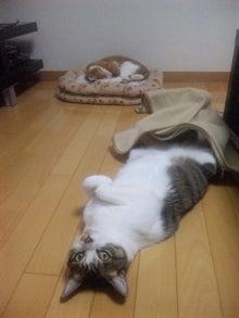 ◆ネコぶろぐ◆-111231_203511.jpg