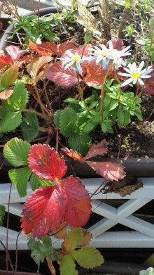 凛と空に咲く-2012010112190000.jpg