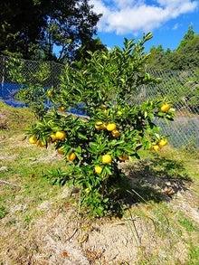 $徳島県最端南部、旧宍喰の奥地で『ゆこう』農園をはじめたんです!