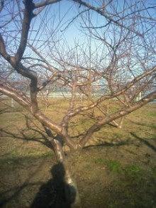 旬に生きる男のブログ-2011-12-13_14-10.jpg