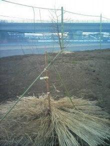 旬に生きる男のブログ-2012-01-02_16-26.jpg