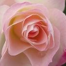 心・体・魂の声を聞く統合セッション~アロマ・クリスタル・エッセンスの融合の記事より