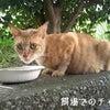 from ☆神奈川県☆チャチャ丸さんの画像
