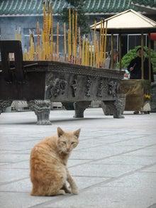 もしゃの動物館-寺の猫2
