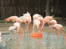 もしゃの動物館-フラミンゴ1