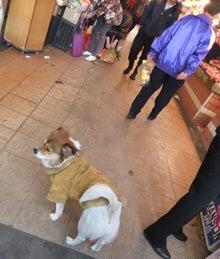 もしゃの動物館-市場の犬