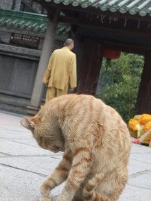 もしゃの動物館-寺の猫4