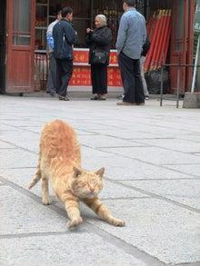もしゃの動物館-寺の猫3