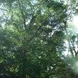 ◆妖精の棲む森で