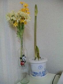 TOKYO Disney RESORT LIFE-DVC00204.jpg