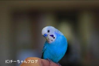 チーちゃんブログ-120108