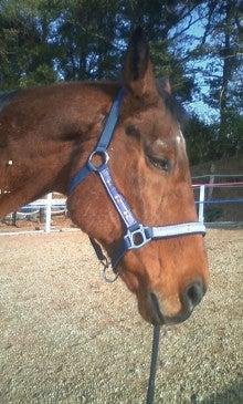 馬を愛する男のブログ Ebosikogen Horse Park-ぽかぽかの冬の日差しに