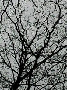 ホシハスバル-2012-01-11 00.28.51.jpg2012-01-11 00.28.51.jpg