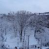 大雪ですの画像