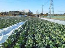 農園星ノ環ブログ *ほしのわ にっき*-20120113103117.jpg