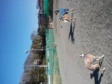 lightamaeさんのブログ-CA3H02000001.jpg