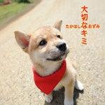 高橋直純オフィシャルブログ「なおずみぶろぐ」Powered by Ameba-『大切なキミ』ジャケット2