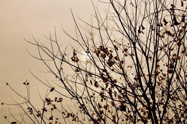 $一期一画-冬の木5