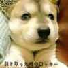from ☆北海道☆オト珠さんの画像
