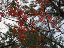 うるまんちゅ 海に暮らす-ハゼの木・パンジギ