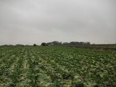 農業のトータルコーディネータ  イノウエ農商事のブログ-01201