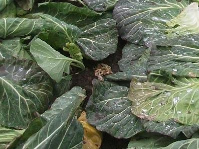 農業のトータルコーディネータ  イノウエ農商事のブログ-01202