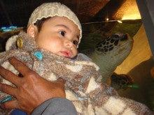 $モルディブからやって来たムジュタバ君と息子君の観察日記