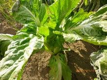 やさいを育てましょか総研 inさいたま  ~家庭菜園や貸し農園や市民農園で~
